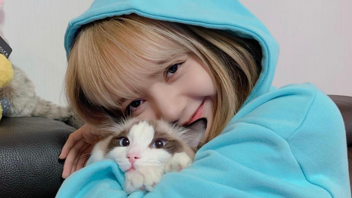 Let's Take A Look At The Cats of KPOP!