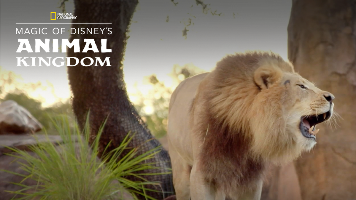 Get Your All-Access Pass To The Animal Kingdom!