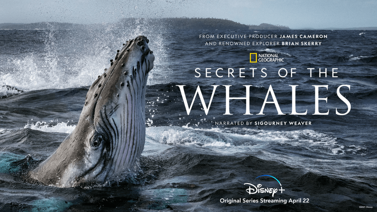 Secret Of The Whales  Has A New Trailer