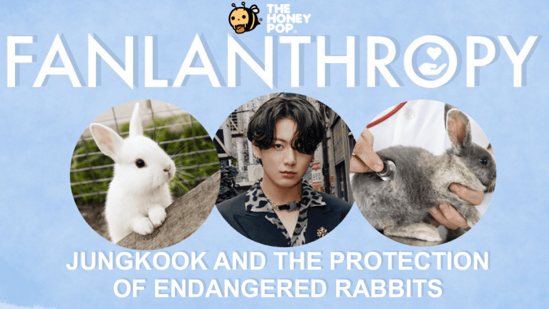 Fanlanthropy: Jungkook And The Protection Of Endangered Rabbits